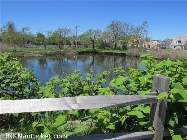 Consue Springs duck pond  just down new hidden bike path next door.