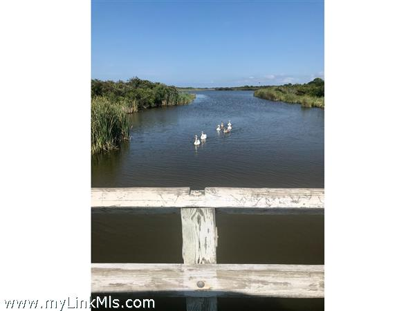 Ducks on Long Pond