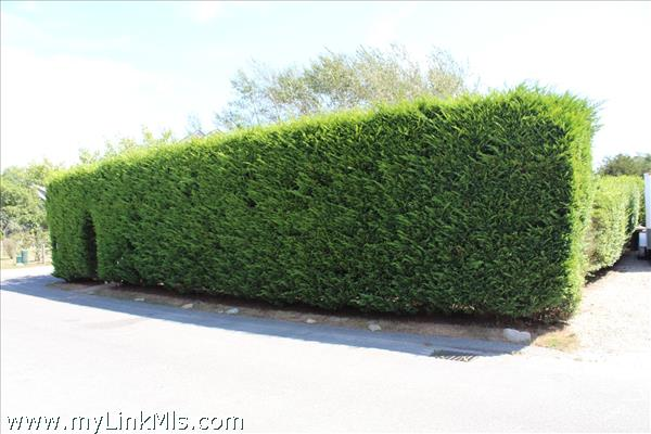 11 Cedar Circle Front yard and side yard privacy hedge