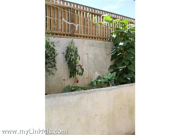 Garden outside basement door.